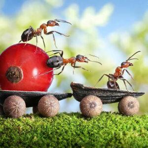Foto Unik Dunia Semut Oleh Fotografer Rusia