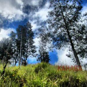 vegetasi gunung tambora