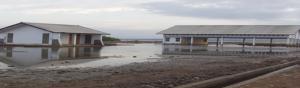 Bangunan industri pengolahan pabrik es (kiri) di PPI Tanjung yang dinilai amburadul. Foto: SYARIF