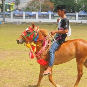 30 Kuda Berlaga Pada Kontes Kuda