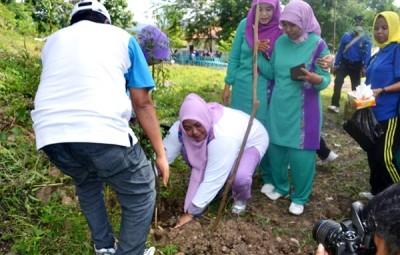 Ketua TP PKK Kota Bima Hj. Yani Marlina HM. Qurais saat menanam pohon di Doro Kalate. Foto: Bin