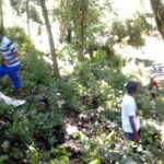 Peduli Hutan, Permata Tanam 1000 Pohon