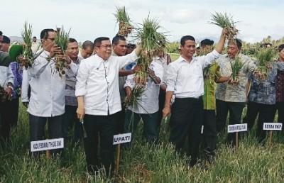 Menteri Pertanian didampingi Bupati Bima saat Panen Bawang. Foto: Hum