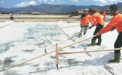 Penjabat Bupati Bima saat panen garam. Foto: Hum