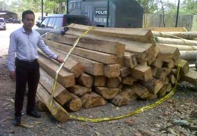 114 kayu tak bertuan yang sudah diamankan. Foto: Bin