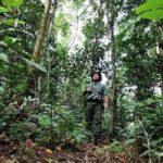 Jaga Hutan, Dishut Tempatkan 47 Personil