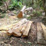 Pembalakan Kayu Kian Marak di Hutan Tambora