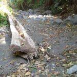 Dishut Tindaklanjuti Kerusakan Hutan Tambora
