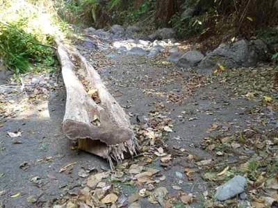 Salah satu sungai di Tambora kering, akibat eksploitasi hutan. Foto: Ady