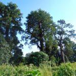 BKSDA Akui Terjadi Illegal Logging di Tambora