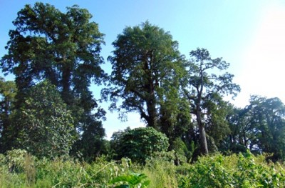 Kawahan Hutan Tambora. Foto: Ady