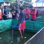 Mahasiswa Belajar Enterpreneur Budidaya Lele di Komunitas Babuju