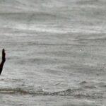 Terjatuh ke Laut, Penumpang Kapal Belum Ditemukan