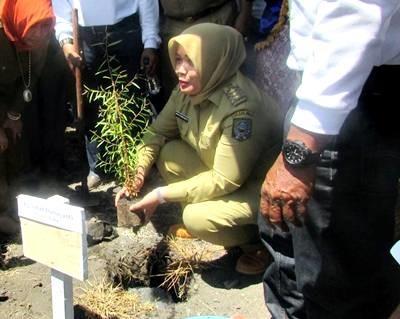Bupati tanam perdana pohon kayu putih di Desa Oi Katupa Kecamatan Tambora. Foto: Hum