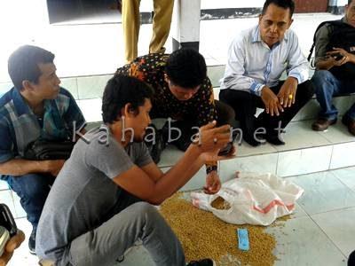 Anggota DPRD Kabupatren Bima Edy Mukhlis saat membuang bibit Kedelai. Foto: Noval
