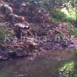 Lurah Penanae Minta H. Doris tidak Buang Kotoran Sapi di Sungai