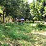 Bagian APU Pantau Lokasi Kuburan Tolotongga