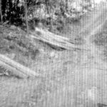 Babat Hutan Kemiri, Oknum UPT Kehutanan dan Aparat Diduga Terlibat