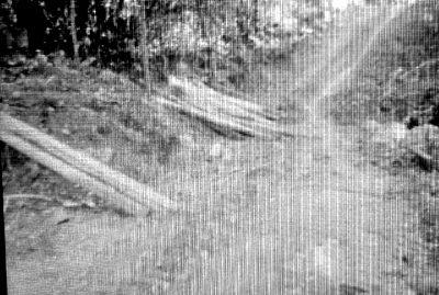 Pohon Kemiri yang disimpan dipinggir jalan usai ditebang. Foto: Zaharudin
