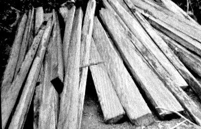 Pohon kemiri yang ditebang dan akan dijadikan papan. Foto: Zaharudin