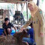 Dispertanak Imbau Masyarakat Potong Ternak di RPH
