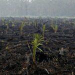 Ratusan Hektar Lahan Pertanian Cetak Sawah Baru Nganggur