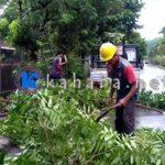 Cuaca Buruk, PLN Optimalkan Perambasan Pohon