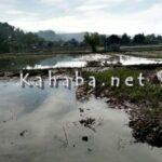 Akibat Banjir, Kerugian Pertanian dan Peternakan Rp 73 Miliar