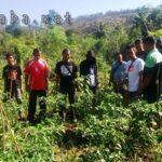 Cabai, Lele dan Unggas Akan Jadi Unggulan Desa Tolowata