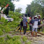 Hujan dan Angin Kencang, Pohon Tumbang Nyaris Menimpa Pengendara