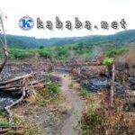 Pembukaan Lahan Jagung, Hutan Berpotensi Rusak