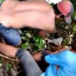Jasad Najwa Ditemukan Bocah Saat Bersihkan Kandang Sapi