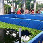 DKP NTB Kunjungi Lokasi Budidaya Lele dan Nila Babuju Mandiri