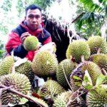 Ayok ke Parado, Makan Durian Lentu