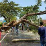 Angin Puting Beliung, Pohon Tumbang, 5 Rumah di Talabiu Rusak