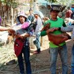 Pemdes Riamau Beli Ratusan Ekor Kambing Pakai Dana Afirmasi