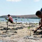 Desa Mbuju Bangun Pondasi Ekowisata, Ratusan Bibit Mangrove Ditanam