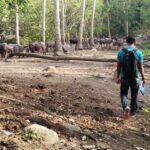 Bangun Agro Wisata, BKPH Tambora Cari Investor