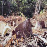 Kerusakan Hutan di Dompu Makin Kritis, Pemda Diduga Tutup Mata