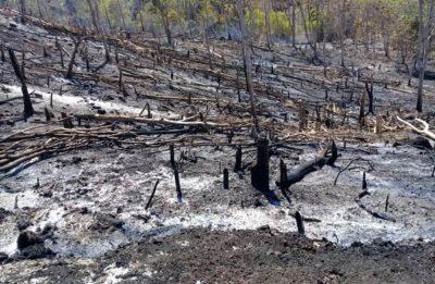 Program HKM, Kondisi Hutan di Wawo Rusak Parah