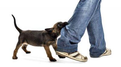 Usai Sholat Subuh, 3 Warga Bolo Digigit Anjing