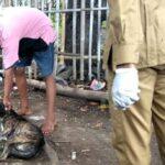 57 Warga Kabupaten Bima Digigit Anjing, 5 Positif Rabies