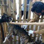 3 Warga Bolo Digigit Anjing dan Khawatir Terjangkit Rabies