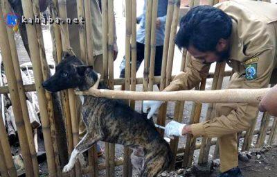 Antisipasi Rabies, UPT Peternakan Bolo Buru Anjing Untuk Divaksinasi