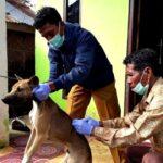 Cegah Wabah Rabies, UPP Donggo Vaksinasi
