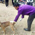 Anjing Rabies Gigit Warga Tonda, UPT Peternakan Madapangga Vaksinasi
