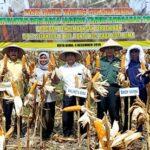 Dinas Pertanian Panen Jagung Srikandi Kuning di Kelurahan Rontu