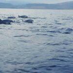 Keren, Ada Wisata Atraksi Lumba Lumba di Kolo