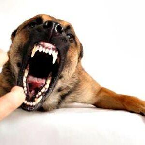 Triwulan Pertama, Dinas Pertanian Eliminasi 151 Ekor Anjing Liar