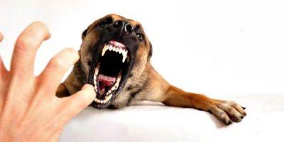 Warga Jatibaru Timur Meninggal Digigit Anjing